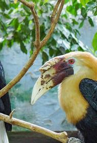 В Московском зоопарке впервые вылупился птенец папуанских калао