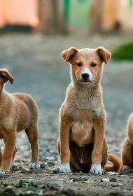 Кинологи назвали самые популярные клички для собак