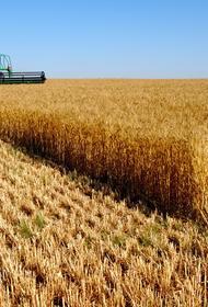 Российское зерно может использоваться как политический инструмент