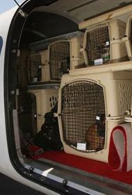 Собачий бизнес: из России вывозят собак для продажи в Европе