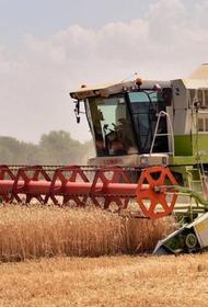 На Кубани собрали больше 9,4 миллиона тонн зерновых