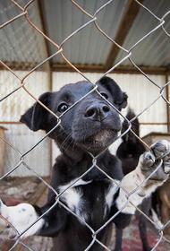 Депутат МГД Александр Козлов: 400 животных из приютов обрели новый дом за счет онлайн-каталогов