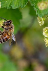 Врач предупредила об опасности укусов насекомых