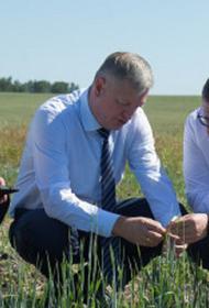 Засуха может оставить без урожая как минимум пять российских регионов