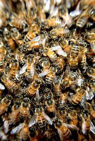 В Кемеровской области выявлена массовая гибель пчёл