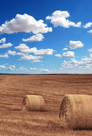 В Башкирии начали уборку урожая зерновых культур