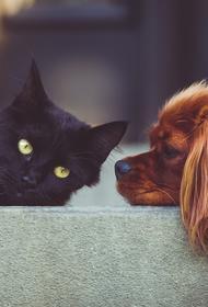Видео, как кошки помогли раненой собаке перейти дорогу