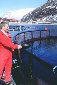Как норвежский лосось попытался стать российским и что из этого вышло