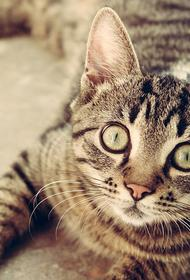 В Британии кошка заразилась коронавирусом от хозяев
