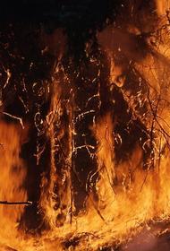 За неделю площадь лесных пожаров в России выросла более чем в два раза