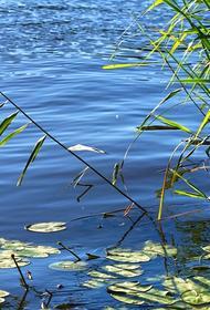 Мужчина и его сын утонули в реке под Вологдой