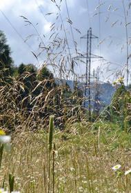 В Апшеронском районе капитально отремонтируют ЛЭП «Ширванская – Черниговская»
