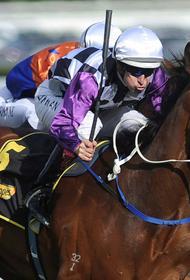 В погоне за первенство жокей покалечил конкурента и угробил его лошадь