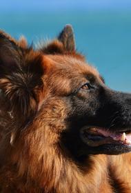 Первая собака, заболевшая коронавирусом в США, умерла
