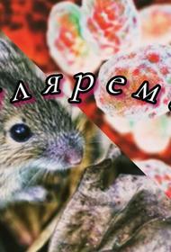 В Смоленской области зафиксировали возбудителя опасного инфекционного заболевания