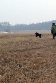 В Хабаровском крае утвердили квоты на добычу диких животных