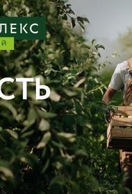Выручка «Агрокомплекса им. Н.И. Ткачёва» за первое полугодие выросла на четверть