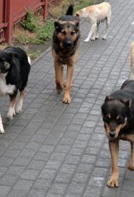 Подмосковное управление СКР: в городе Лобне на беременную женщину и 7-летнего ребенка напала стая бездомных собак