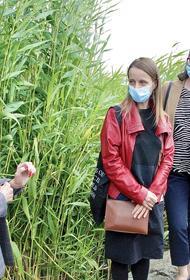В Челябинске обсуждают благоустройство набережной озера Смолино