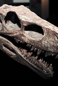 Ученые нашли в останках динозавра, жившего на Земле 76 млн лет назад, раковую опухоль