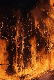 В лесах Иркутской области за сутки обнаружено два возгорания