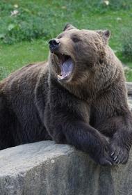 В Сочи медведи загрызли ребенка, который зашел к ним в вольер