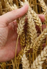 В Иркутской области из-за хорошей погоды началась уборка урожая