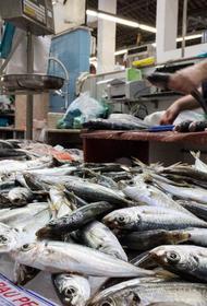 В августе в Хабаровском крае начнутся поставки «доступной рыбы»