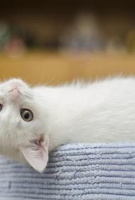 Московские спасатели вытащили котенка, который провалился в щель между стеной дома и асфальтовым покрытием