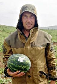 В Бурятии начался сбор арбузов