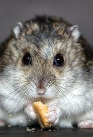 В Германии мыши сгрызли урожай