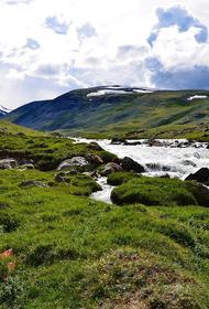 В Алтайском крае исследователи обнаружили чумную бактерию