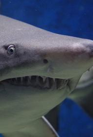 В Австралии серфер избил акулу и спас супругу