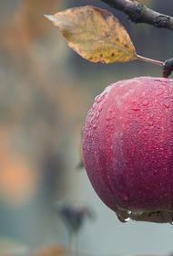 Диетологи рассказали о пользе яблок