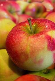 Кандидат медицинских наук рассказал, как получить максимальную пользу от яблок