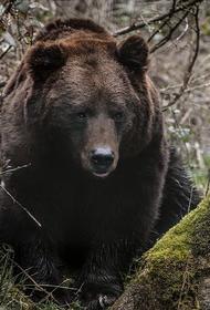 Пропавший под Нижним Тагилом три дня назад грибник спасался от медведя на дереве