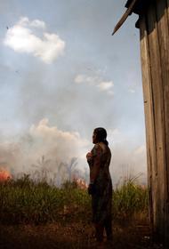В Бразилии уничтожают уникальную экосистему