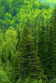 85% лесов не контролируются государством