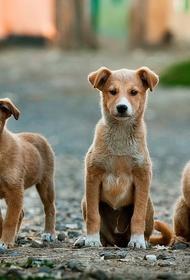 В Солнечногорске животные чуть не погибли из-за человеческой халатности