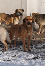 Россиян обяжут маркировать домашних животных