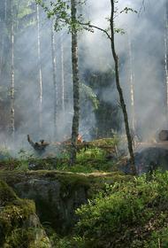Четыре лесных пожара охватили Кубань одновременно