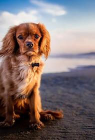 В Сочи произошла драка сотрудников пляжа с незнакомцем из-за собаки