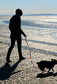 Сотрудники одного из сочинских пляжей подрались с посетителем