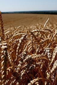 Кубань вышла в лидеры по эффективности агрокомплекса