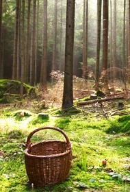 Лес полон неожиданностей