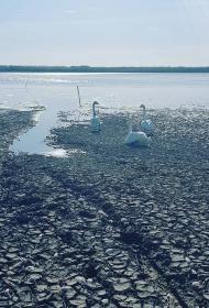 «Ситуация критичная. Рыба дохнет». В Краснодарском крае экологическая катастрофа - нет пресной воды