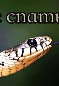 Уснувшей на улице женщине в рот заползла змея. Рептилию извлекали медики