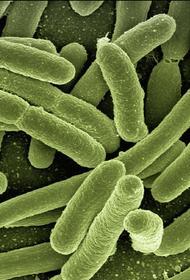 Главный онколог Минздрава рассказал об испытаниях нового метода лечения рака вирусами