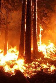 В Ростовской области ввели режим ЧС на территории одного из сел из-за лесного пожара