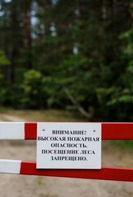 В Анапе продлен запрет на посещение лесов после пожара в заповеднике Утриш